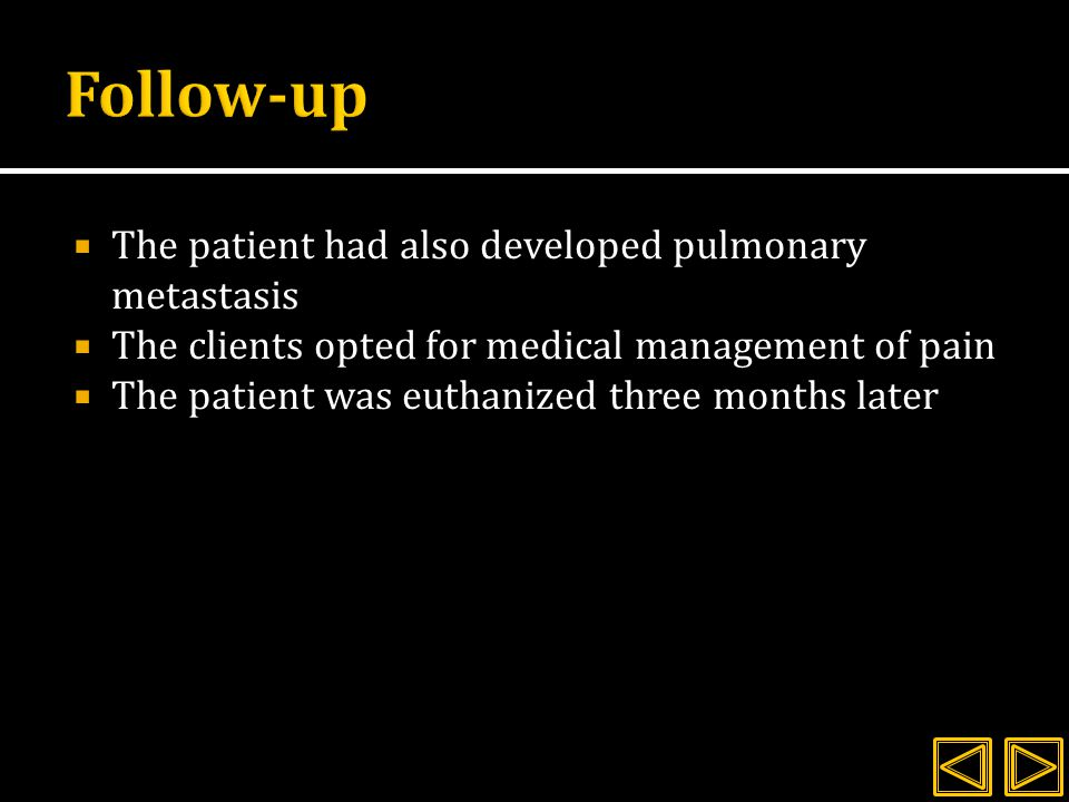  The patient had also developed pulmonary metastasis  The clients opted for medical management of pain  The patient was euthanized three months later