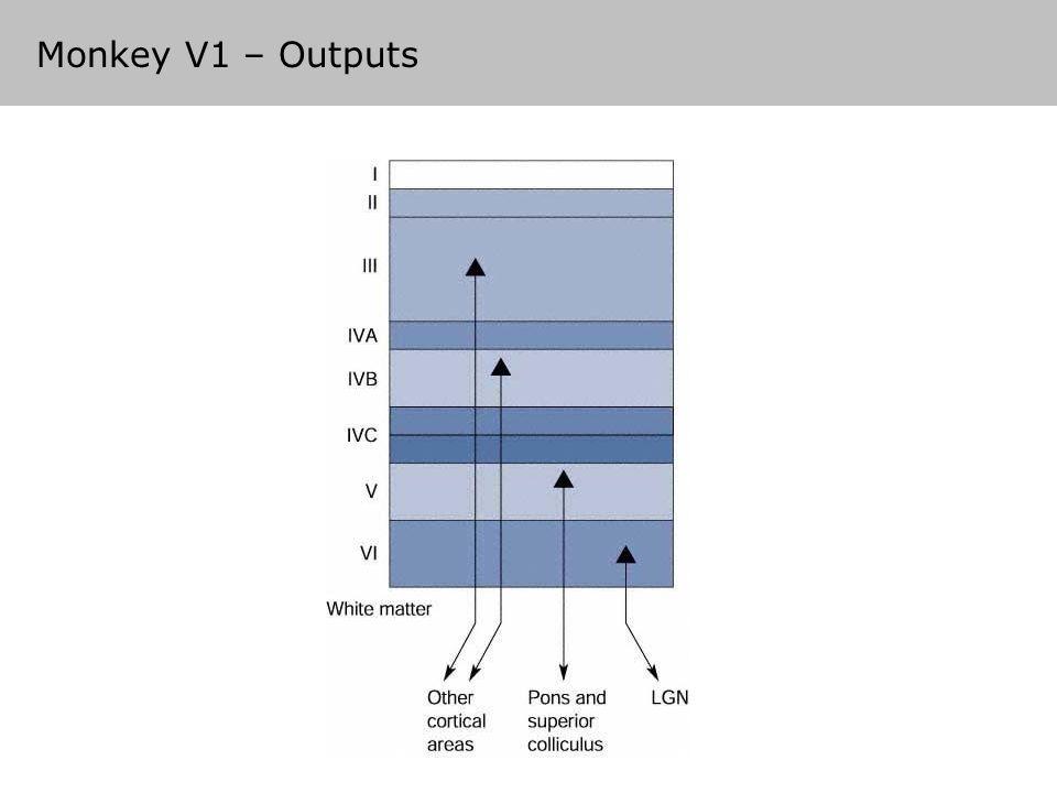 Monkey V1 – Outputs
