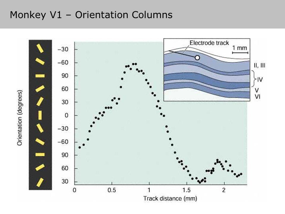 Monkey V1 – Orientation Columns