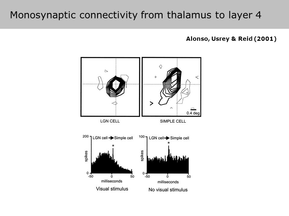 Analysis of monosynaptic connections Alonso, Usrey & Reid (2001) Monosynaptic connectivity from thalamus to layer 4