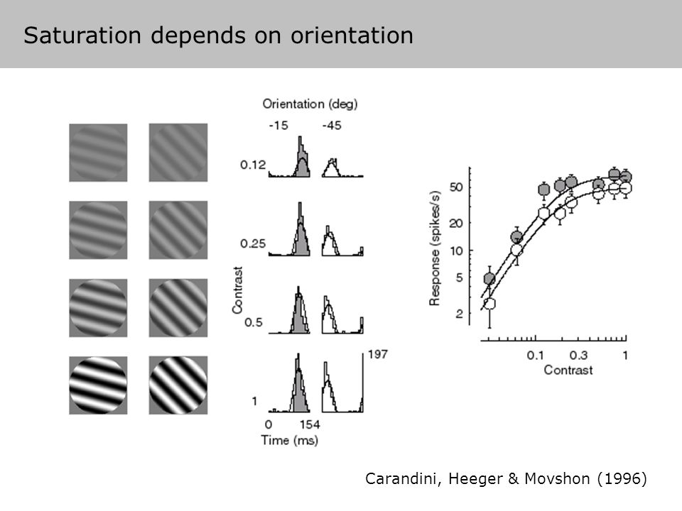 Carandini, Heeger & Movshon (1996) Saturation depends on orientation