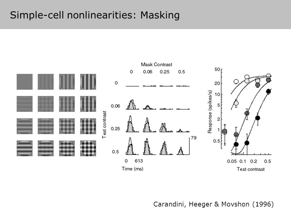 Carandini, Heeger & Movshon (1996) Simple-cell nonlinearities: Masking