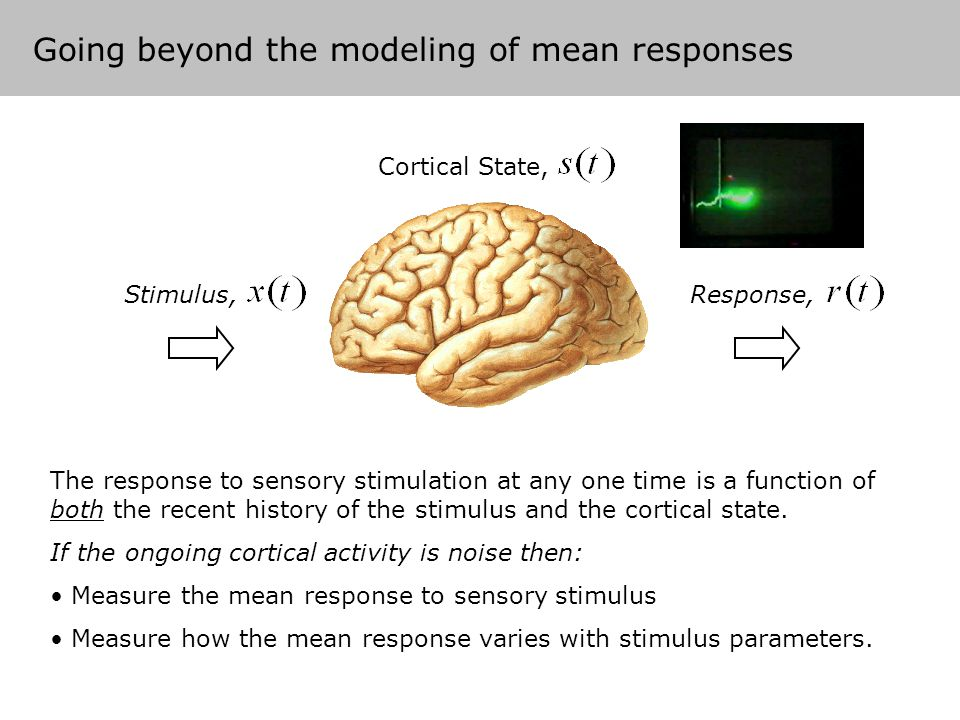 Why is the cortical state important.