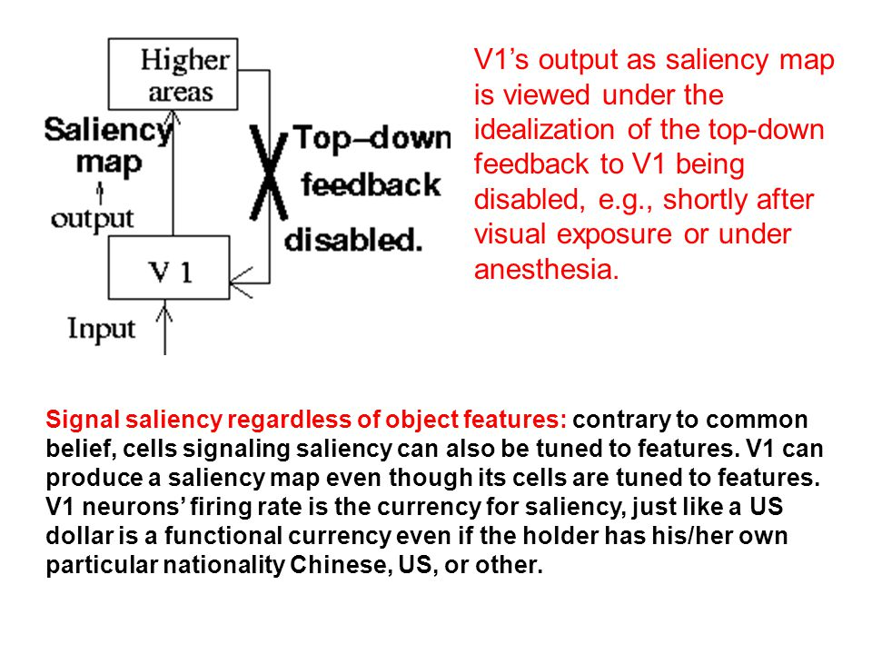 V1's output as saliency map is viewed under the idealization of the top-down feedback to V1 being disabled, e.g., shortly after visual exposure or und