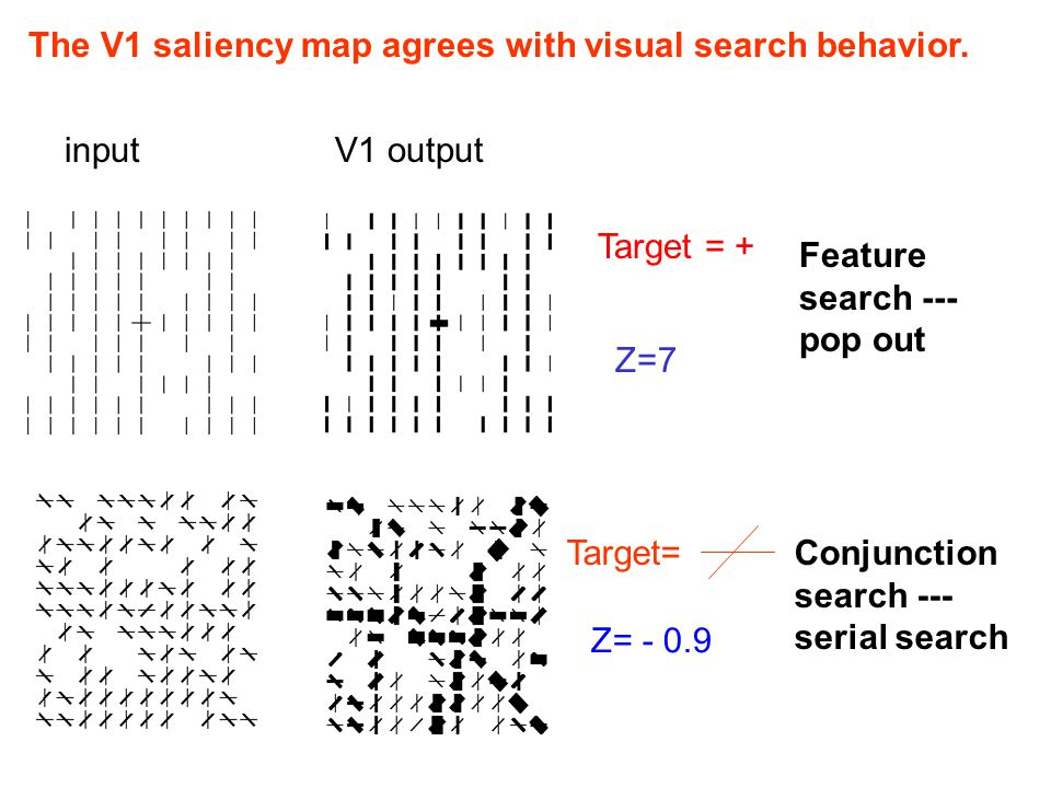 The V1 saliency map agrees with visual search behavior. Z= - 0.9 Target=Conjunction search --- serial search inputV1 output Target = + Z=7 Feature sea