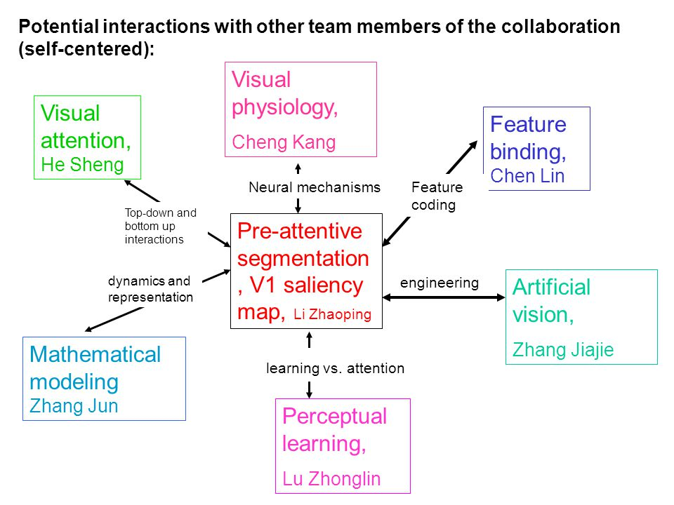 Potential interactions with other team members of the collaboration (self-centered): Pre-attentive segmentation, V1 saliency map, Li Zhaoping Feature