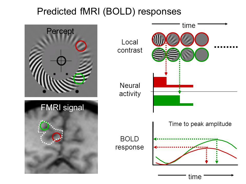 Predicted fMRI (BOLD) responses Percept FMRI signal BOLD response time Local contrast Neural activity time Time to peak amplitude
