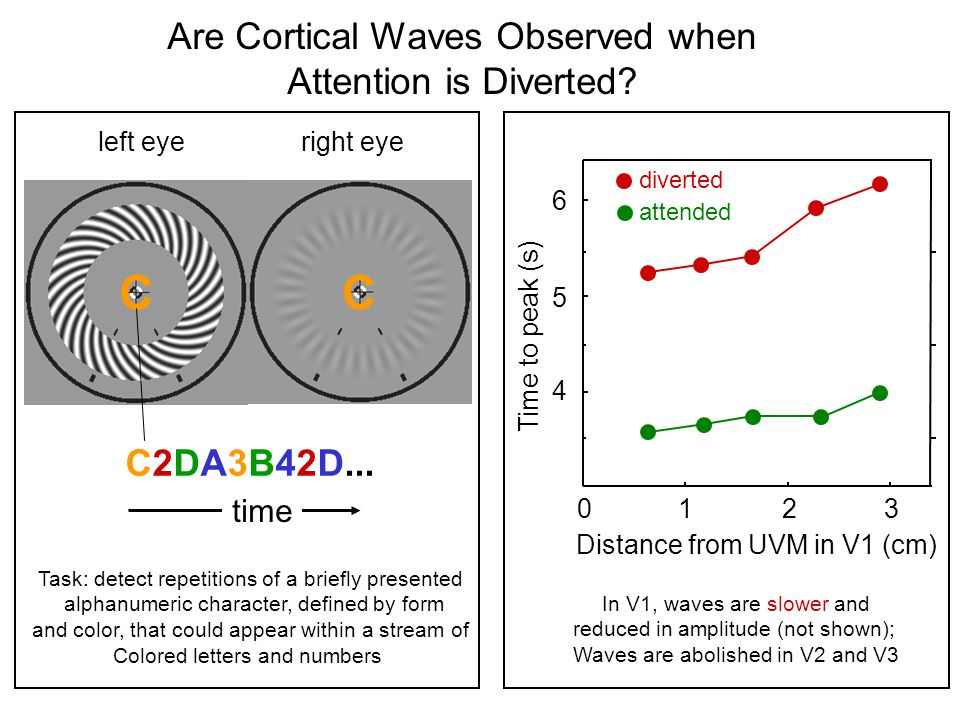 left eyeright eye Distance from UVM in V1 (cm) Time to peak (s) Are Cortical Waves Observed when Attention is Diverted.