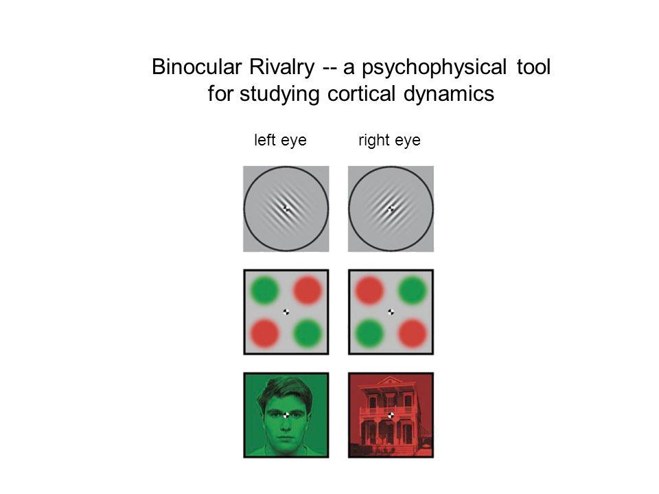Binocular Rivalry -- a psychophysical tool for studying cortical dynamics left eyeright eye