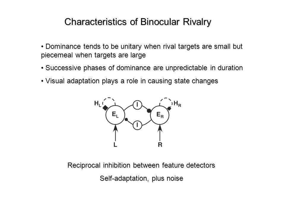 Characteristics of Binocular Rivalry Dominance tends to be unitary when rival targets are small but piecemeal when targets are large Dominance tends to be unitary when rival targets are small but piecemeal when targets are large Successive phases of dominance are unpredictable in duration Successive phases of dominance are unpredictable in duration Visual adaptation plays a role in causing state changes Visual adaptation plays a role in causing state changes Reciprocal inhibition between feature detectors Self-adaptation, plus noise