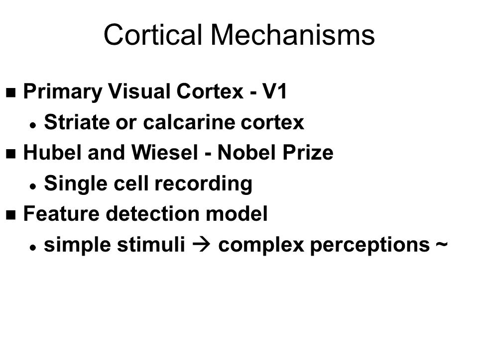 Cortical Mechanisms n Primary Visual Cortex - V1 l Striate or calcarine cortex n Hubel and Wiesel - Nobel Prize l Single cell recording n Feature detection model l simple stimuli  complex perceptions ~