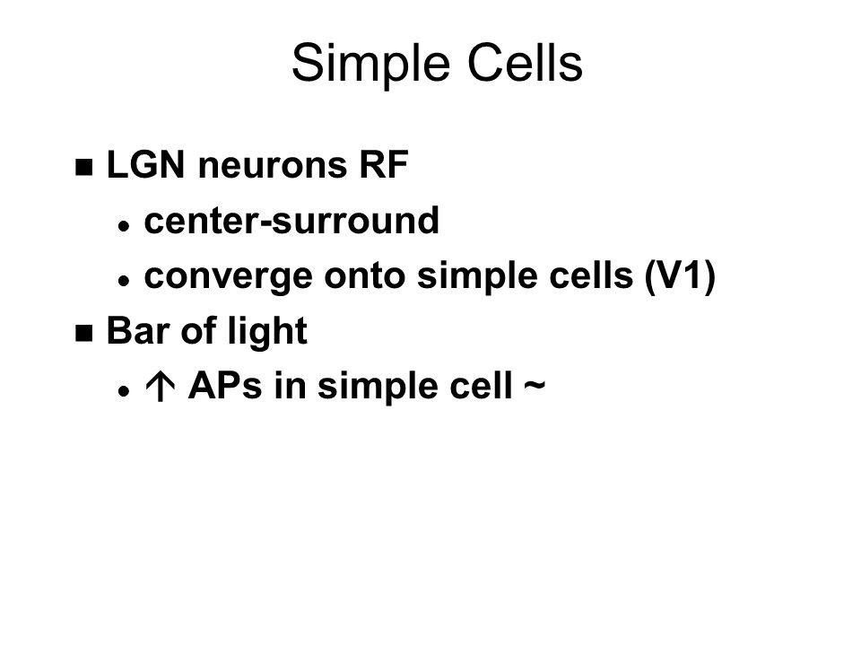 Simple Cells n LGN neurons RF l center-surround l converge onto simple cells (V1) n Bar of light l  APs in simple cell ~