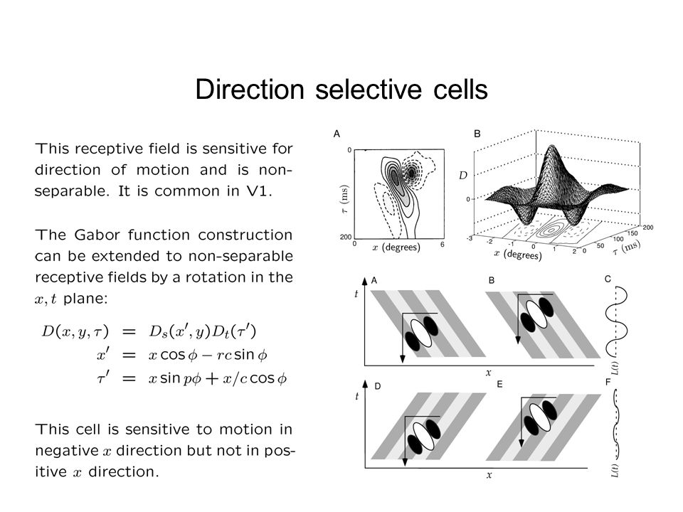 Direction selective cells
