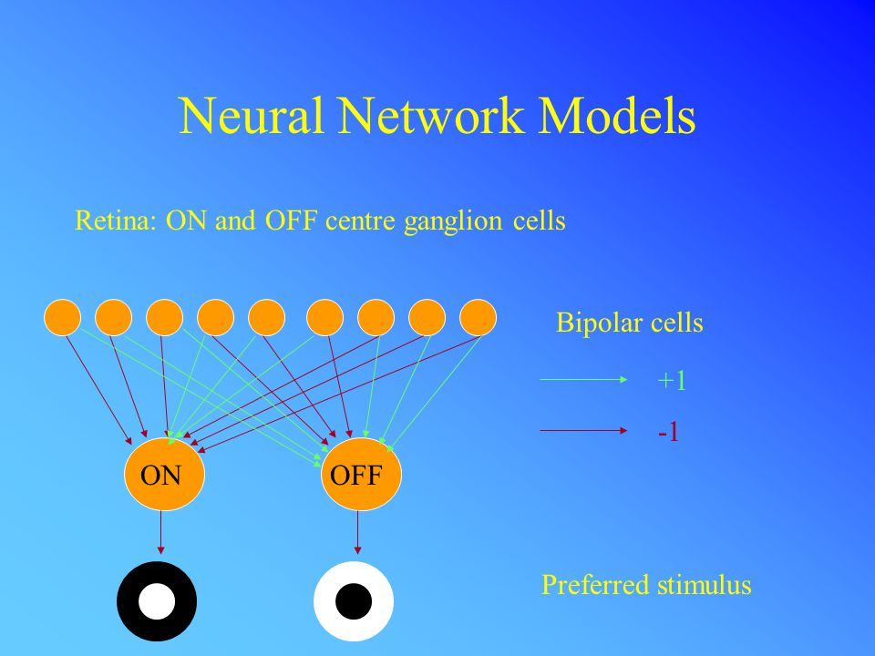 Neural Network Models Retina: ON and OFF centre ganglion cells Bipolar cells +1 ONOFF Preferred stimulus