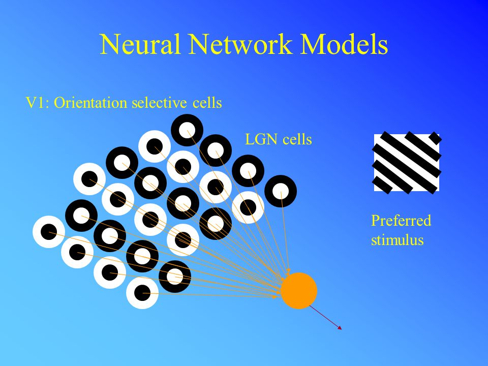 Neural Network Models V1: Orientation selective cells Preferred stimulus LGN cells