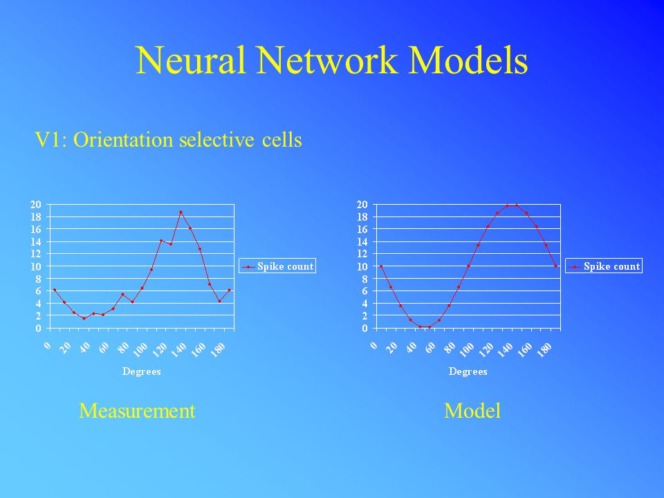 Neural Network Models V1: Orientation selective cells MeasurementModel