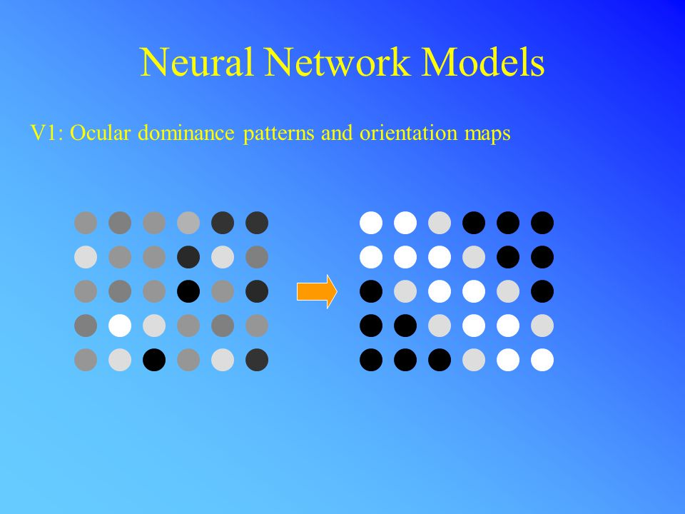 Neural Network Models V1: Ocular dominance patterns and orientation maps