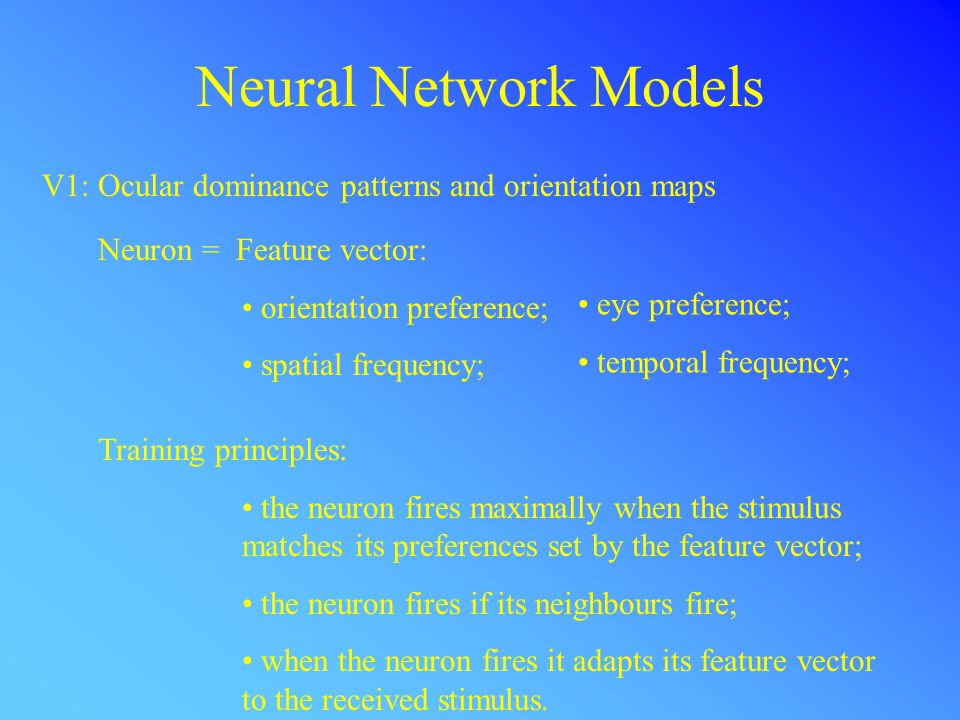 Neural Network Models V1: Ocular dominance patterns and orientation maps Neuron = Feature vector: orientation preference; spatial frequency; eye preference; temporal frequency; Training principles: the neuron fires maximally when the stimulus matches its preferences set by the feature vector; the neuron fires if its neighbours fire; when the neuron fires it adapts its feature vector to the received stimulus.
