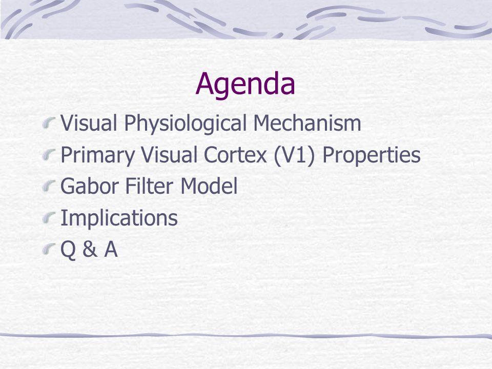 Agenda Visual Physiological Mechanism Primary Visual Cortex (V1) Properties Gabor Filter Model Implications Q & A