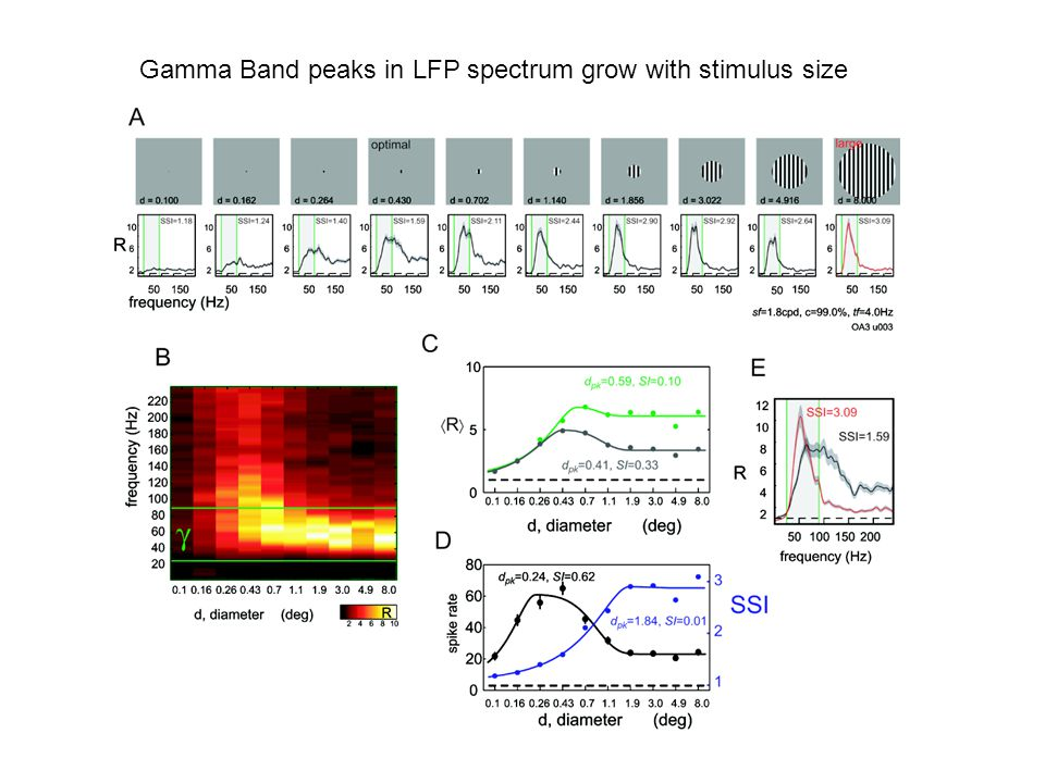 Gamma Band peaks in LFP spectrum grow with stimulus size