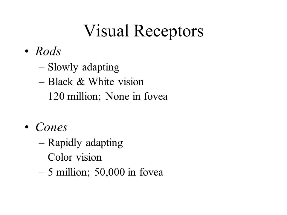 Visual Receptors Rods –Slowly adapting –Black & White vision –120 million; None in fovea Cones –Rapidly adapting –Color vision –5 million; 50,000 in fovea
