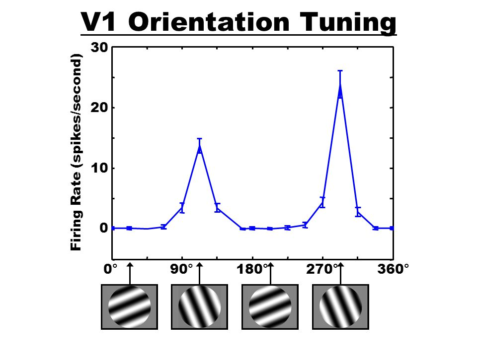 V1 Spatial Frequency Tuning 0.1250.250.51248 Firing Rate (spikes/second) 5 10 15 20 cycles/degree