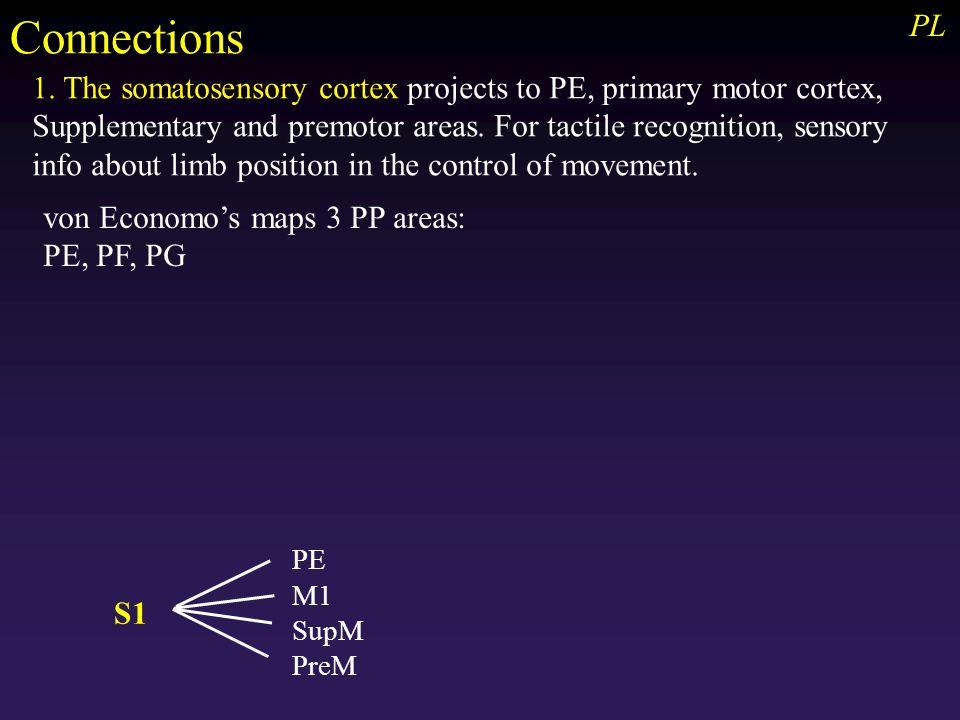 PL von Economo's maps 3 PP areas: PE, PF, PG Connections 1.