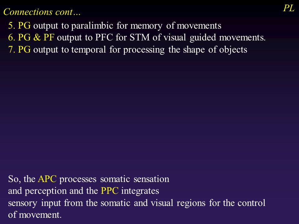 PL Connections cont… 5. PG output to paralimbic for memory of movements 6.
