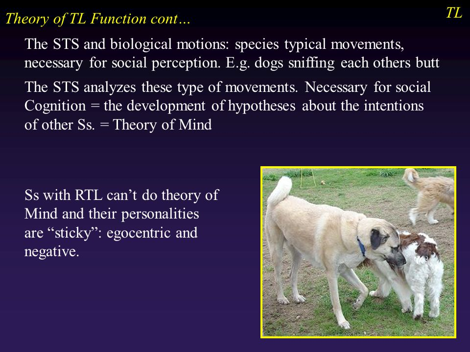 TL Theory of TL Function cont… The STS and biological motions: species typical movements, necessary for social perception.