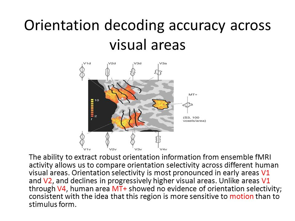 The ability to extract robust orientation information from ensemble fMRI activity allows us to compare orientation selectivity across different human visual areas.