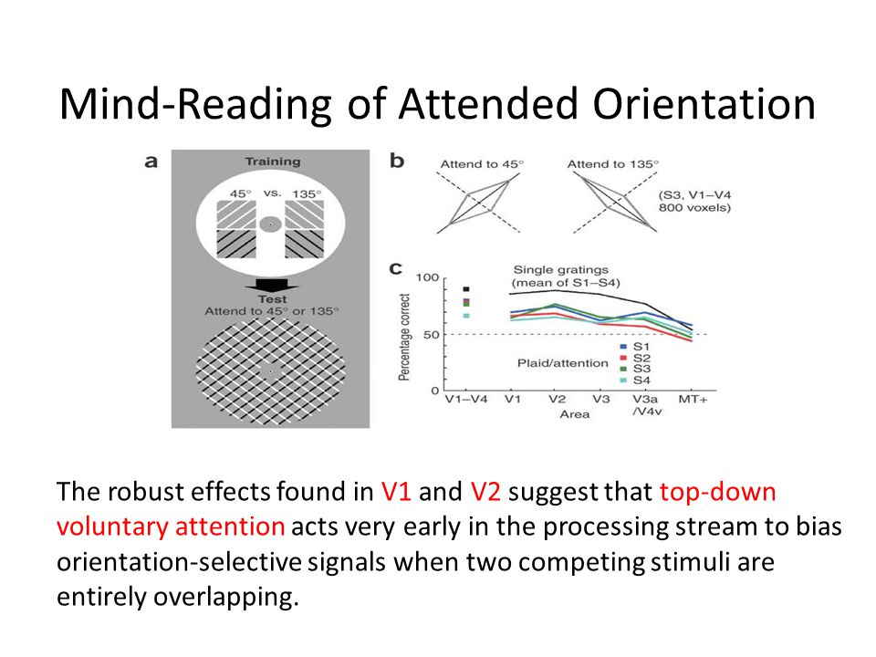 Mind-Reading of Attended Orientation The robust effects found in V1 and V2 suggest that top-down voluntary attention acts very early in the processing stream to bias orientation-selective signals when two competing stimuli are entirely overlapping.