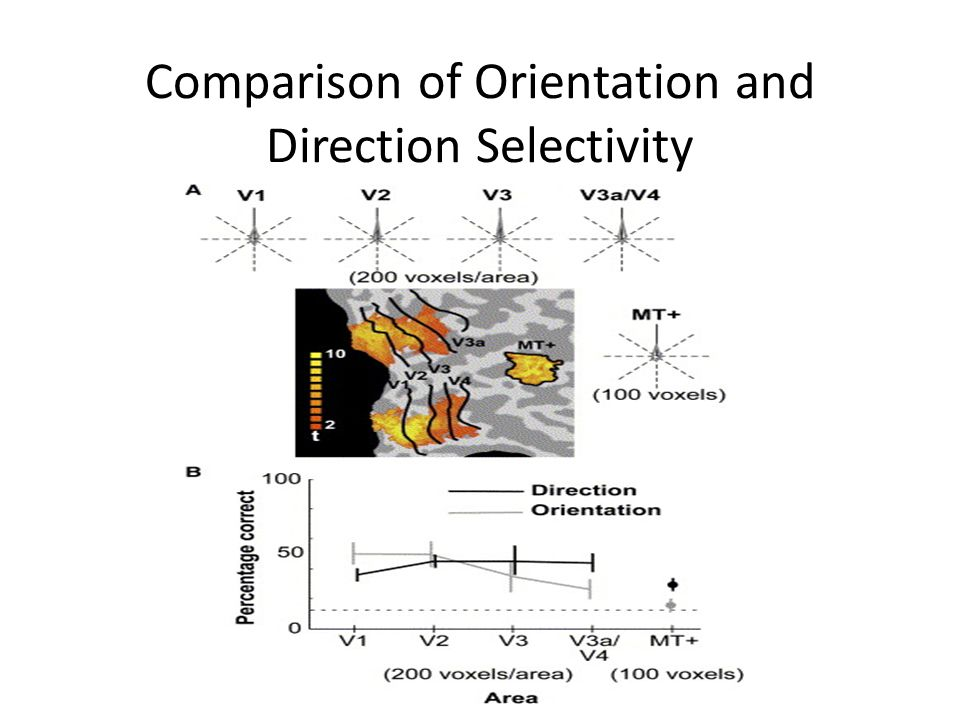 Comparison of Orientation and Direction Selectivity