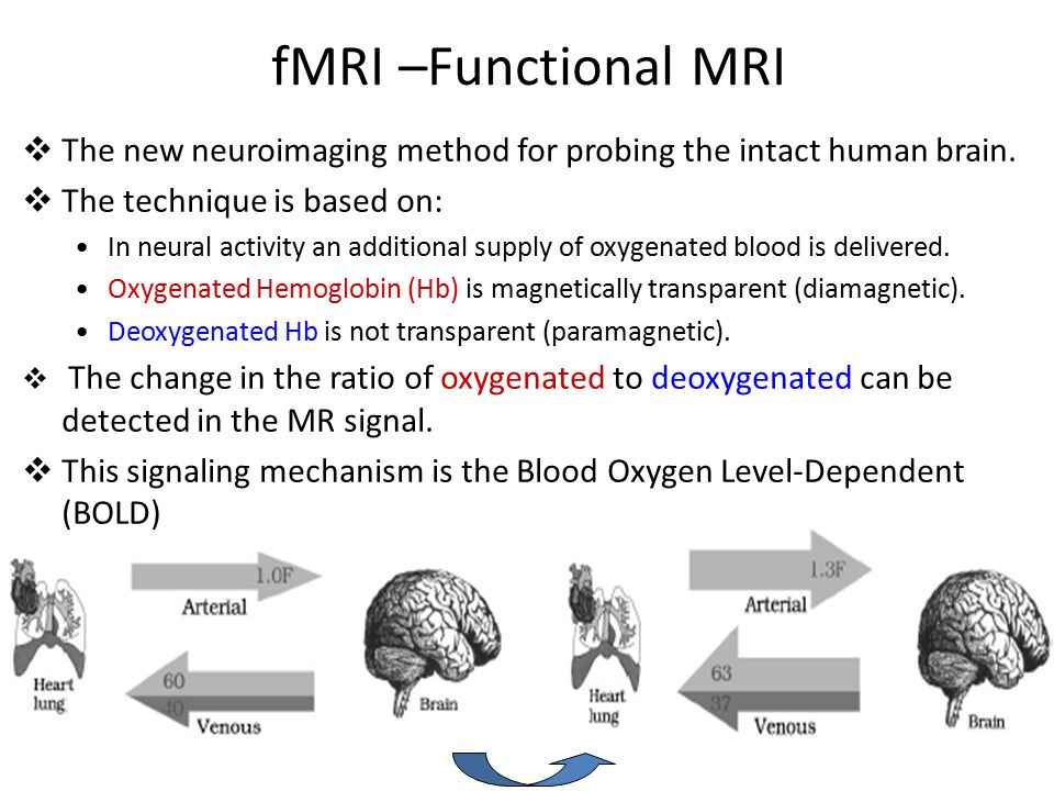 fMRI –Functional MRI  The new neuroimaging method for probing the intact human brain.