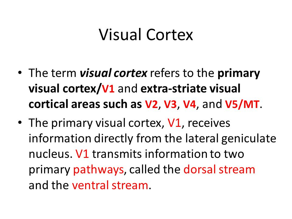 Visual Cortex The term visual cortex refers to the primary visual cortex/ V1 and extra-striate visual cortical areas such as V2, V3, V4, and V5/MT.