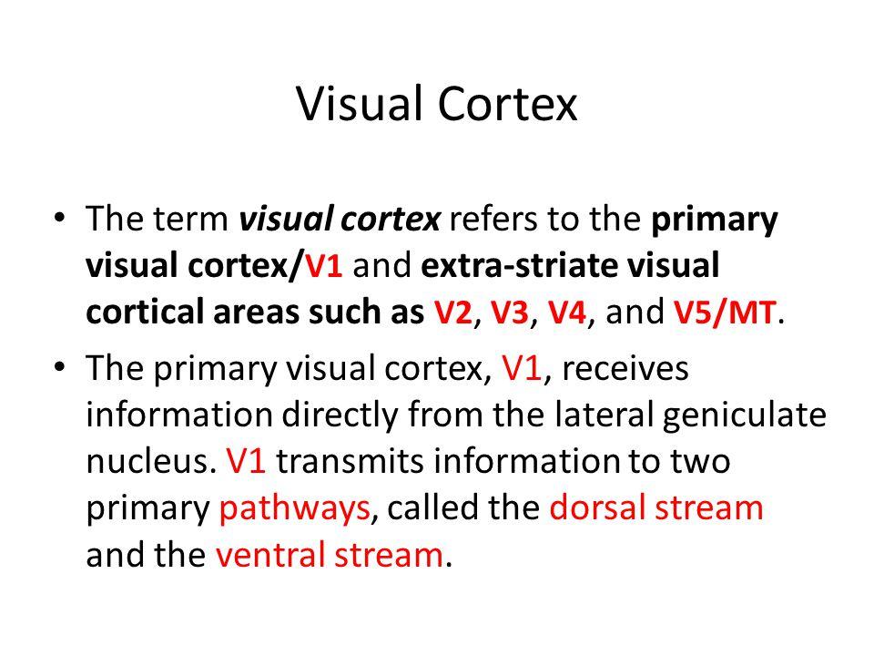 Visual Cortex The term visual cortex refers to the primary visual cortex/ V1 and extra-striate visual cortical areas such as V2, V3, V4, and V5/MT. Th