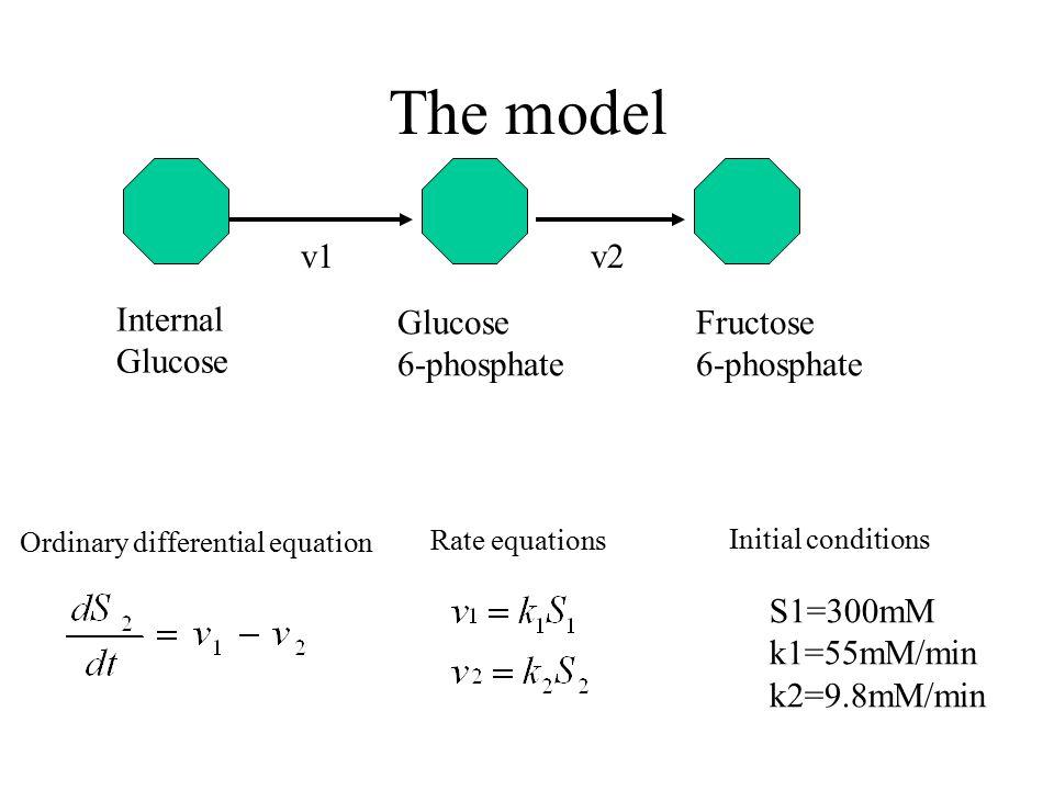 The model Glucose 6-phosphate Fructose 6-phosphate v1v2 Internal Glucose S1=300mM k1=55mM/min k2=9.8mM/min Ordinary differential equation Rate equatio