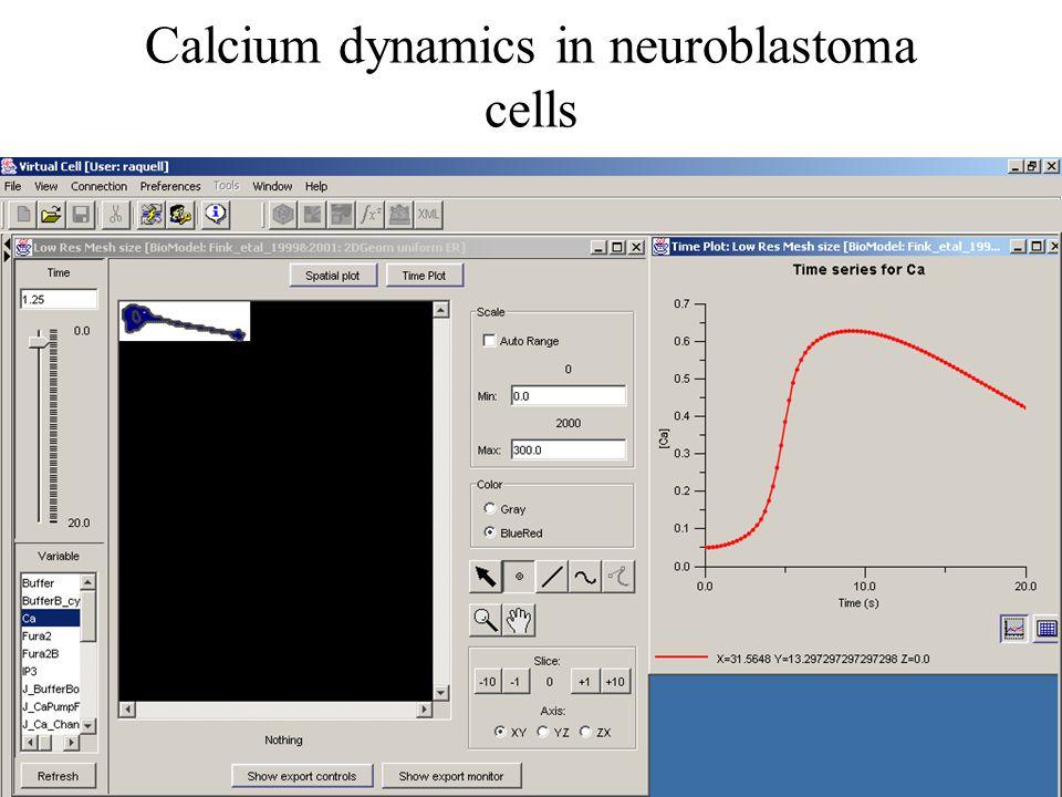 Calcium dynamics in neuroblastoma cells
