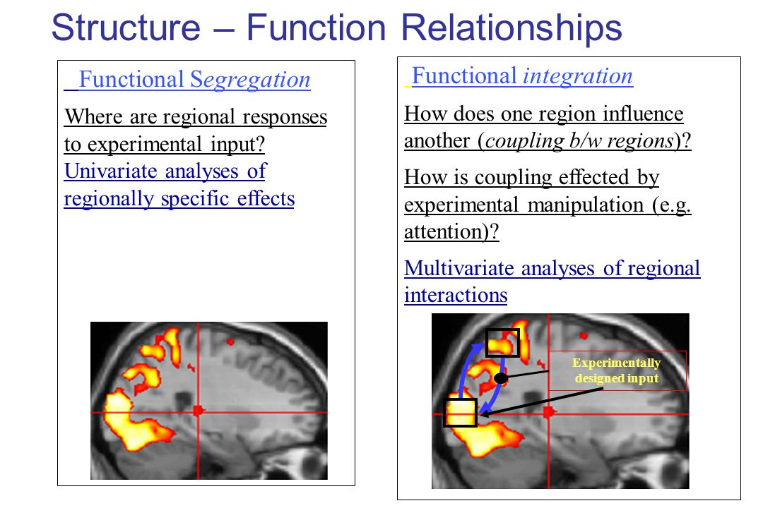 Structure – Function Relationships Functional Segregation Where are regional responses to experimental input.