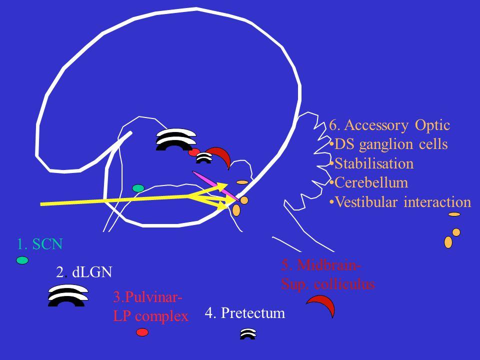 1. SCN 2. dLGN 3.Pulvinar- LP complex 6.