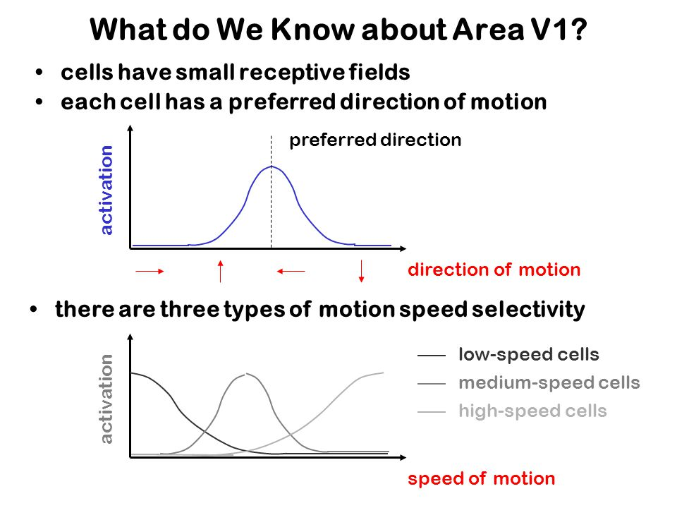 What do We Know about Area V1.