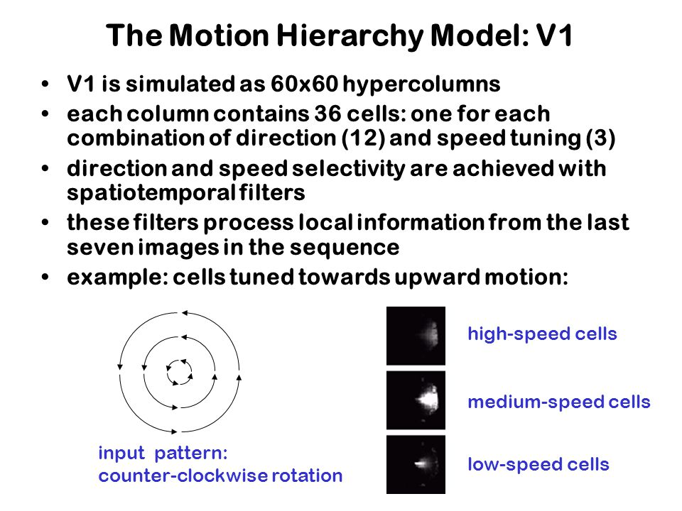 The Motion Hierarchy Model: V1 V1 is simulated as 60x60 hypercolumns each column contains 36 cells: one for each combination of direction (12) and speed tuning (3) direction and speed selectivity are achieved with spatiotemporal filters these filters process local information from the last seven images in the sequence example: cells tuned towards upward motion: input pattern: counter-clockwise rotation high-speed cells medium-speed cells low-speed cells