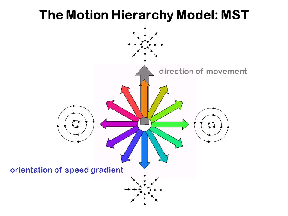 The Motion Hierarchy Model: MST direction of movement orientation of speed gradient