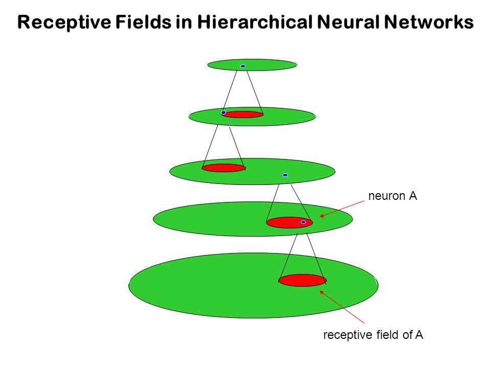 Receptive Fields in Hierarchical Neural Networks receptive field of A in input layer neuron A in top layer