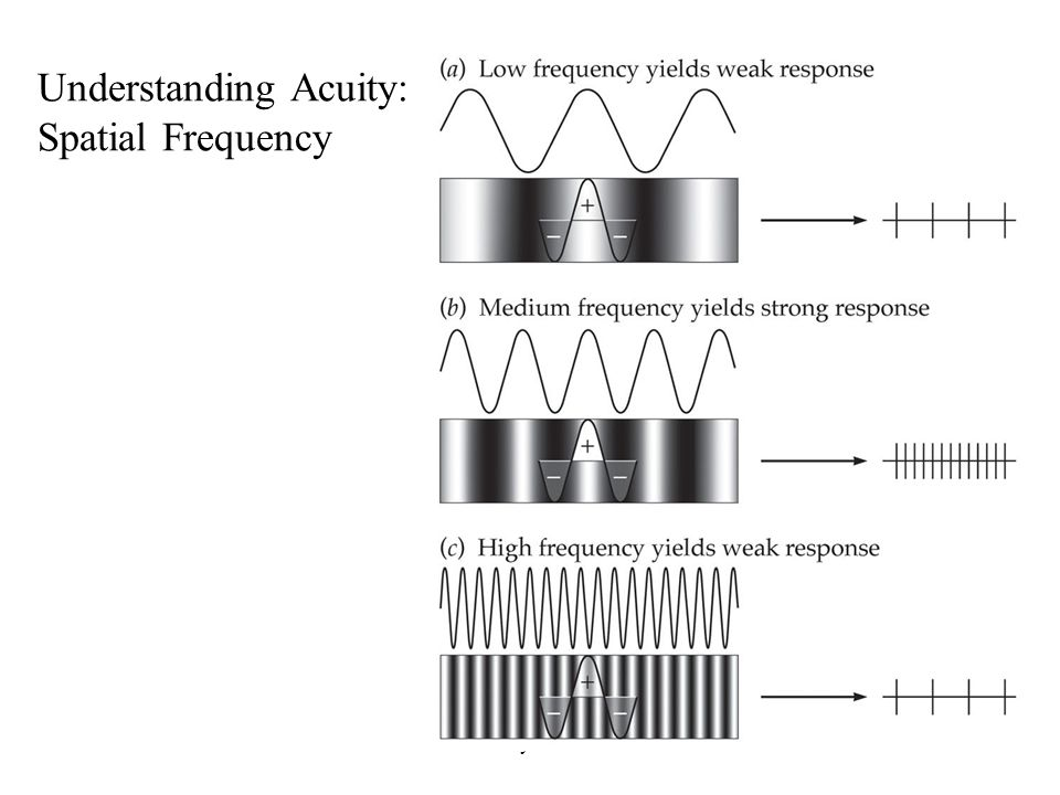 Anthony J Greene24 Understanding Acuity: Spatial Frequency