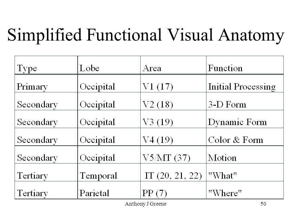 Anthony J Greene50 Simplified Functional Visual Anatomy