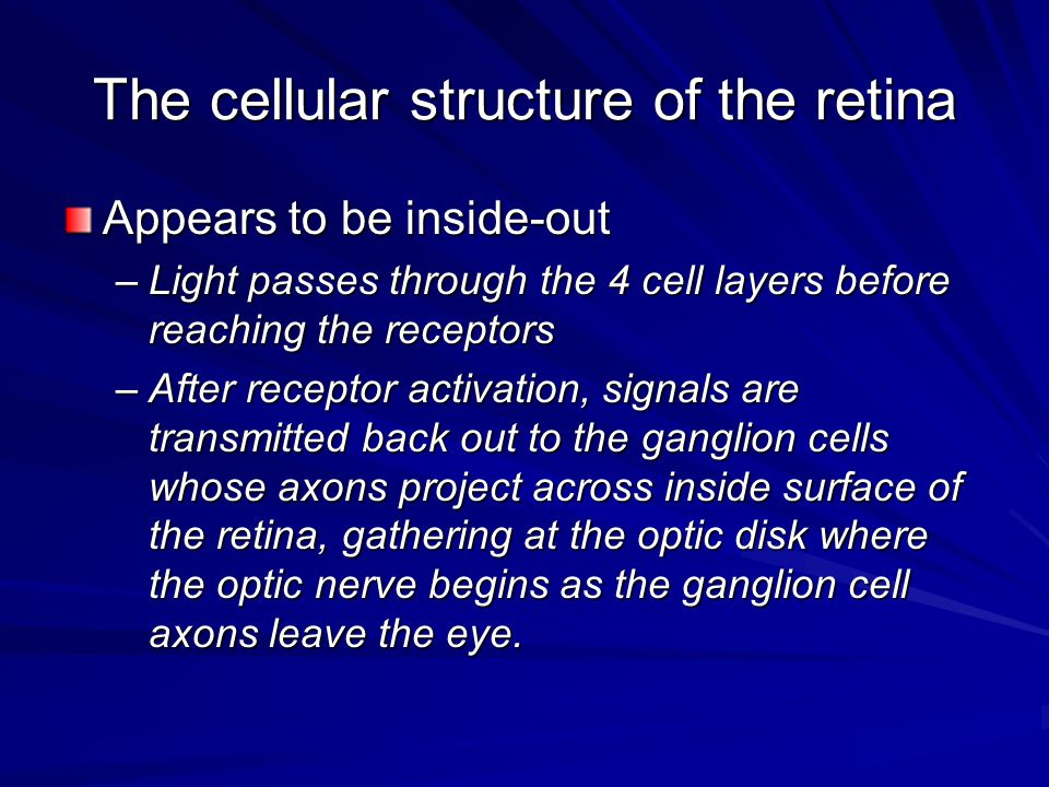 The cellular structure of the retina Appears to be inside-out –Light passes through the 4 cell layers before reaching the receptors –After receptor ac