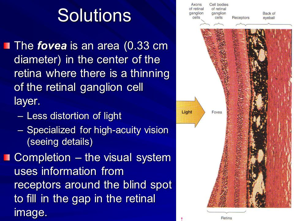 Solutions The fovea is an area (0.33 cm diameter) in the center of the retina where there is a thinning of the retinal ganglion cell layer. –Less dist