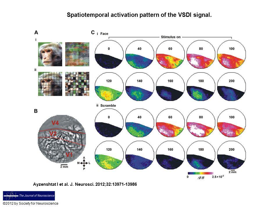 Spatiotemporal activation pattern of the VSDI signal. Ayzenshtat I et al. J. Neurosci. 2012;32:13971-13986 ©2012 by Society for Neuroscience