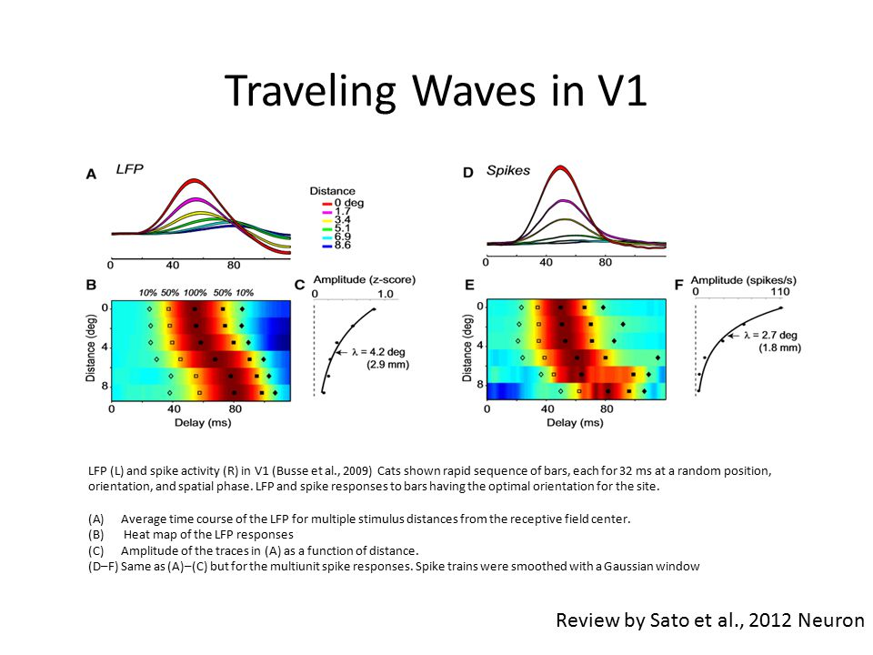 Traveling Waves in V1 Review by Sato et al., 2012 Neuron LFP (L) and spike activity (R) in V1 (Busse et al., 2009) Cats shown rapid sequence of bars, each for 32 ms at a random position, orientation, and spatial phase.