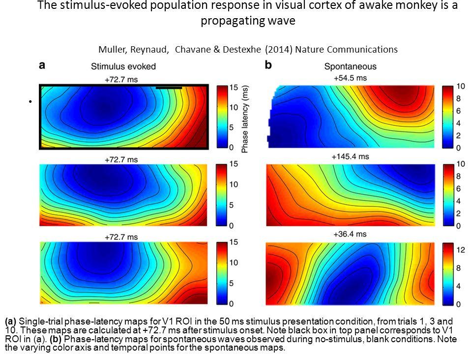 The stimulus-evoked population response in visual cortex of awake monkey is a propagating wave Muller, Reynaud, Chavane & Destexhe (2014) Nature Commu